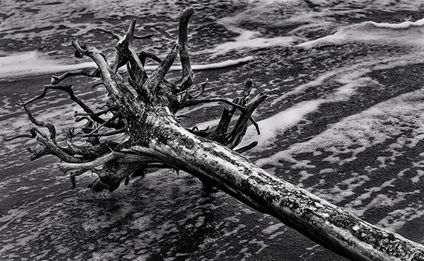 Barn.Driftwood April 2014_3171.1