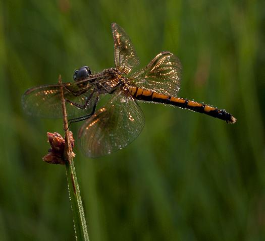 Dragonflies. Caterpillar 6.26