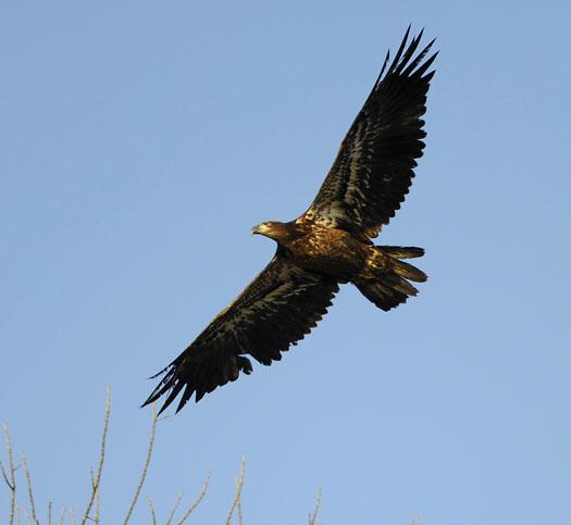 Eagles 12.6.09_120609_7864