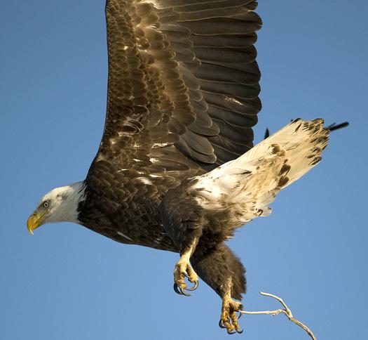 Eagles 2.21.2010_022110_2233