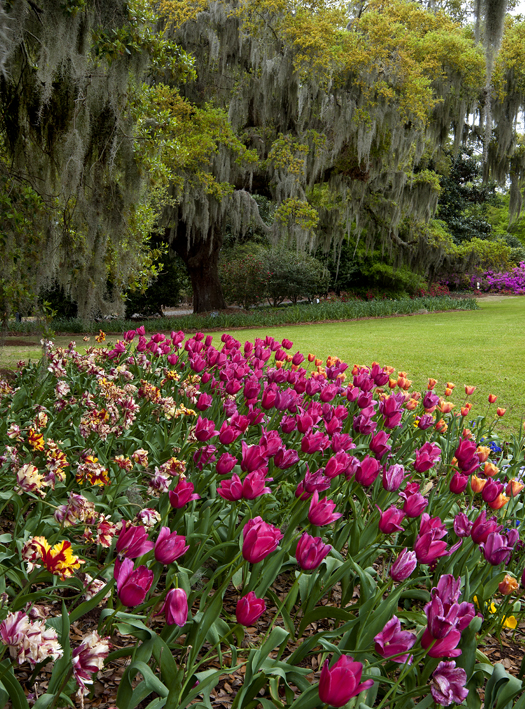 Easter Wilm NC 2014_6165