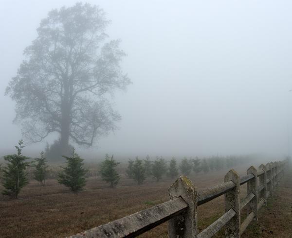 Fall Foliage . Foggy Fields 11.12.2014_9330