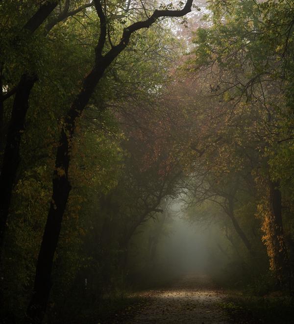 Fog Woods Foxtail 10.30.2014_8522