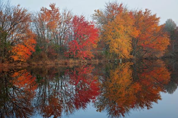 Hp Sunrise.FallColorsPonds.Tree.11.11.2014