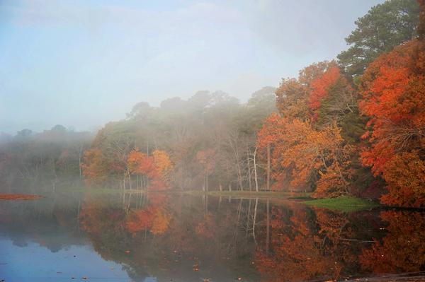 Hp Sunrise.FallColorsPonds.Tree.11.11.2014_9240