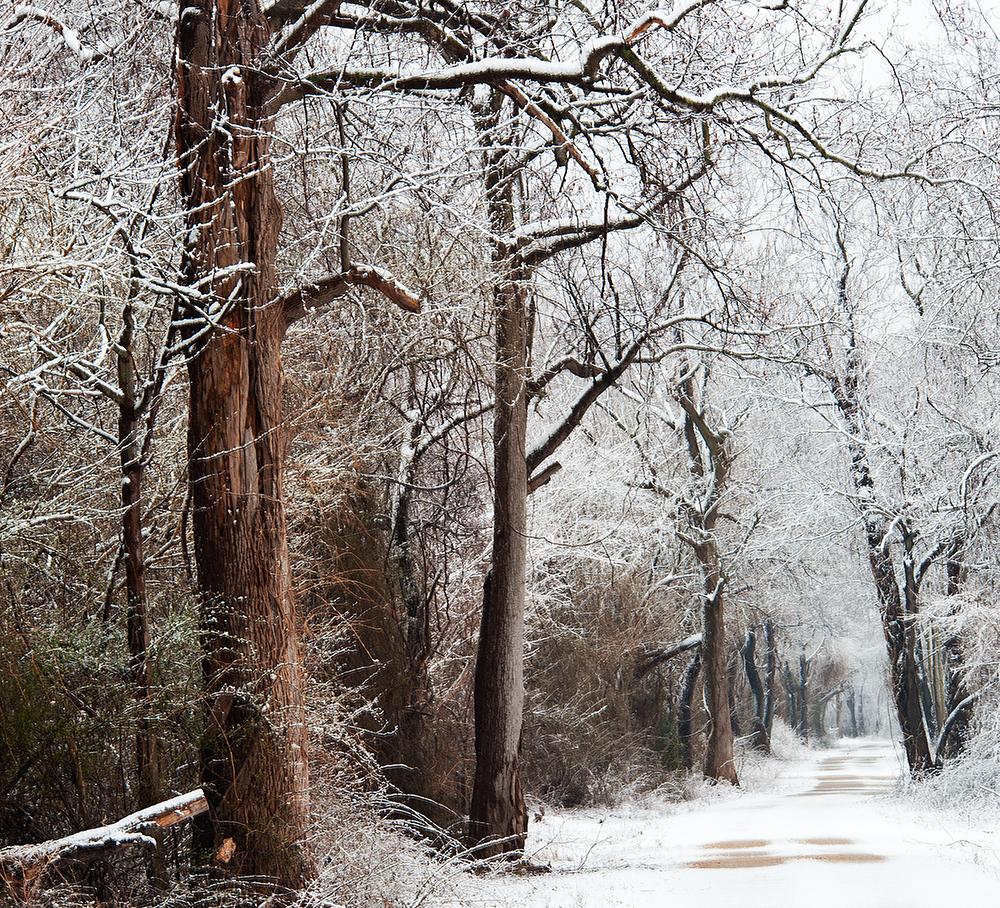 Snow Dover 3.25.2013_5742