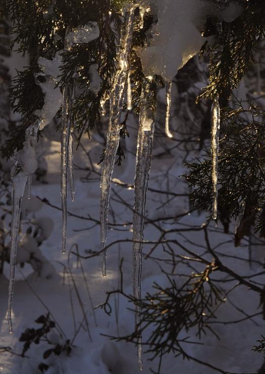 Snow Scenes 2.8.2010_020810_0782