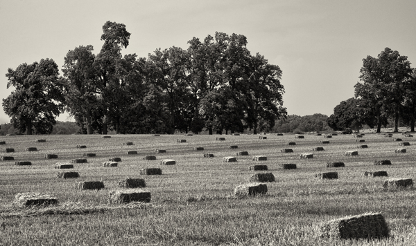 Straw Bales Queenstown MD 7.2.2014_1759