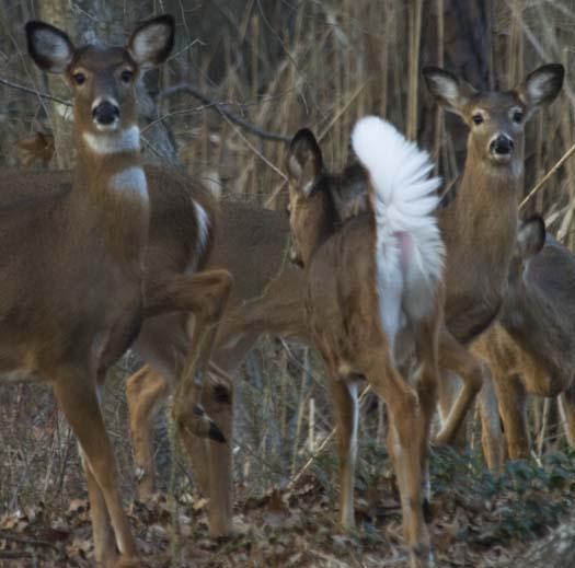 deer-2-25-2008_8835copy1.jpg