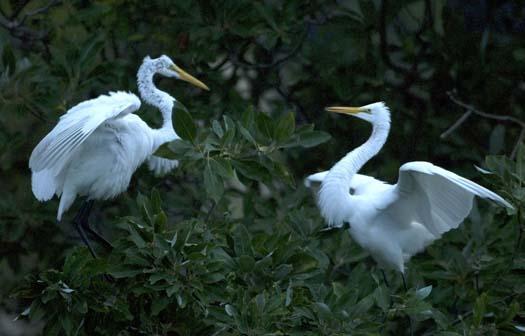 egret-roost-9-13-2008_091308_9189.jpg