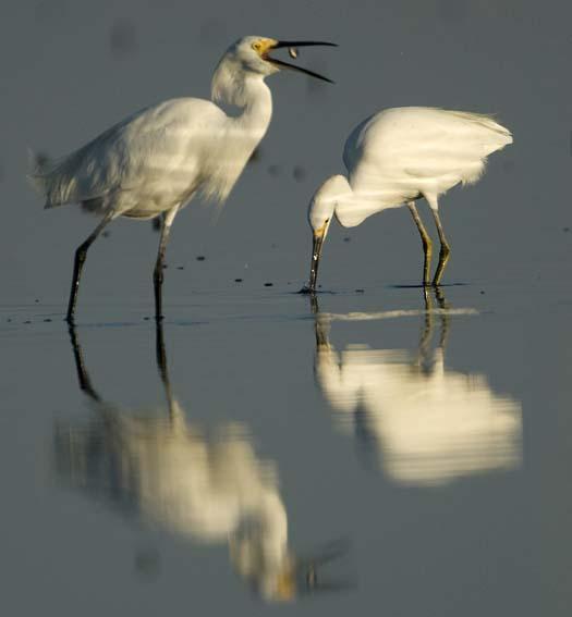 egrets-cormorant-9-7-2008_090708_8854.jpg
