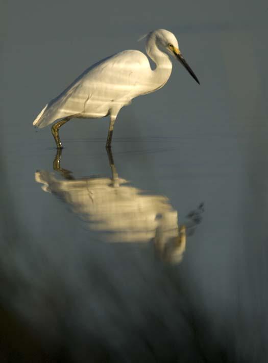 egrets-cormorant-9-7-2008_090708_8905.jpg