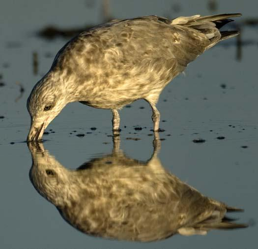 egrets-cormorant-9-7-2008_090708_8928.jpg