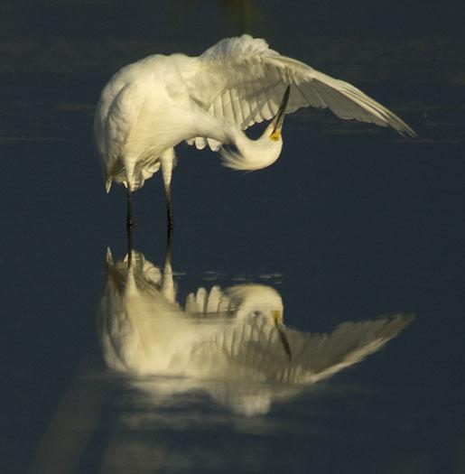 egrets-sunset-6-23-2009_062309_2709