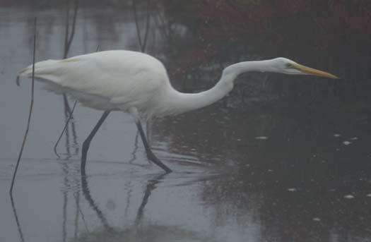 fowlers-sunrise-egrets-10-6-2007-95copy1.jpg
