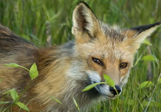 fox-5-5-2008_050508_64571.jpg