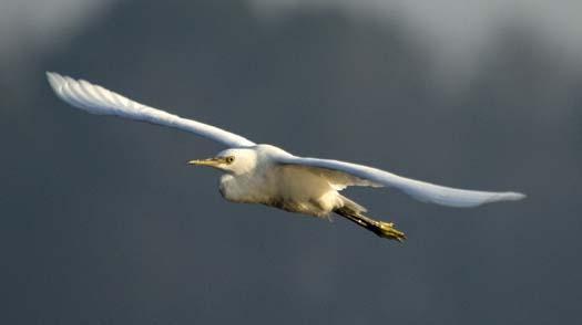 heron-egrets-8-16-2008_081608_8291.jpg