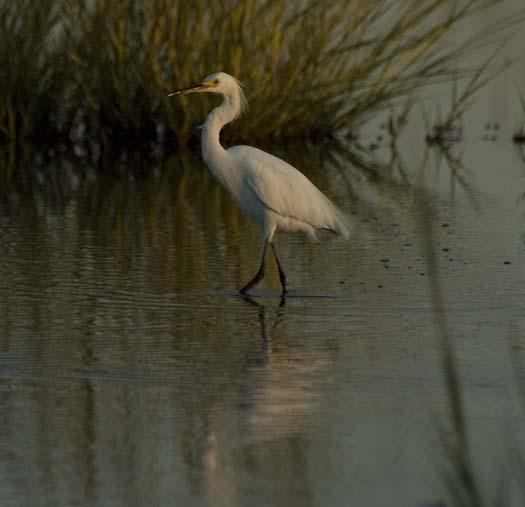 rabbit-heron-egrets-august_083108_8373.jpg