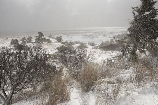snowstorm-cape-h-3-2-2009_030209_3971