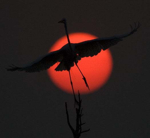 sunrise-7-18-2008_071808_67312.jpg