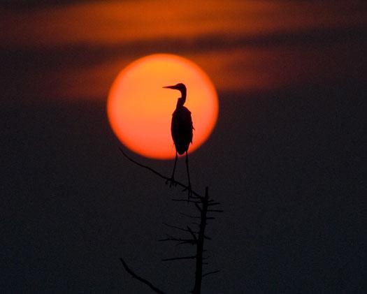 sunrise-7-18-2008_071808_67372