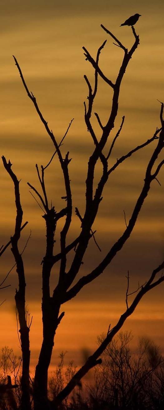 sunrise-and-sunset-1-8-2008-primehook-refuge_4955copy1.jpg