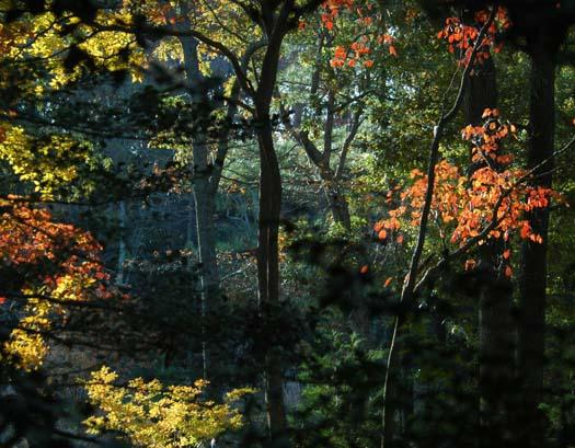 sunrise-fox-primehook-11-17-2007-051copy2.jpg