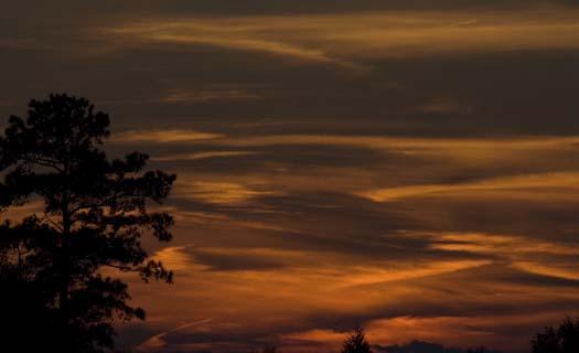 sunset-1-18-2008-snow-geese-sun-setting-primehook_5880copy1.jpg