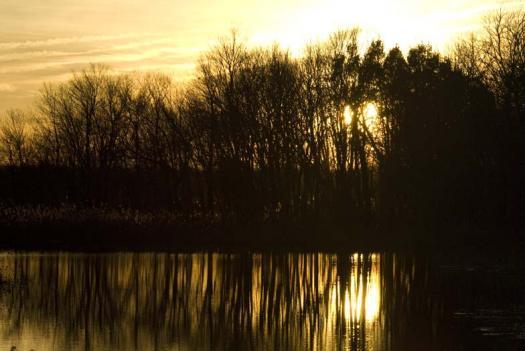 sunset-1-9-2008-heron-trees_5077copy1.jpg