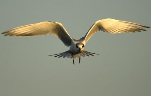 terns-egrets-10-2-2008_100208_0019.jpg