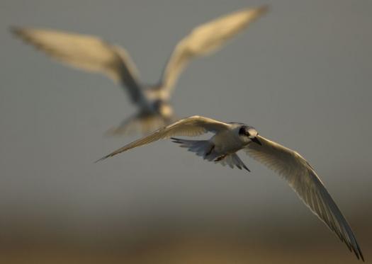 terns-egrets-10-2-2008_100208_9977.jpg