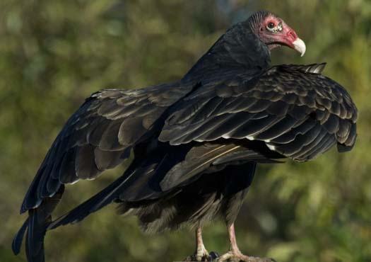vulture-10282007-37copy2.jpg